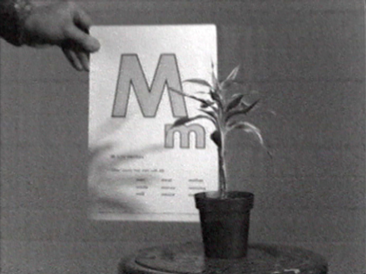 John Baldessari, Teaching a Plant the Alphabet, 1972